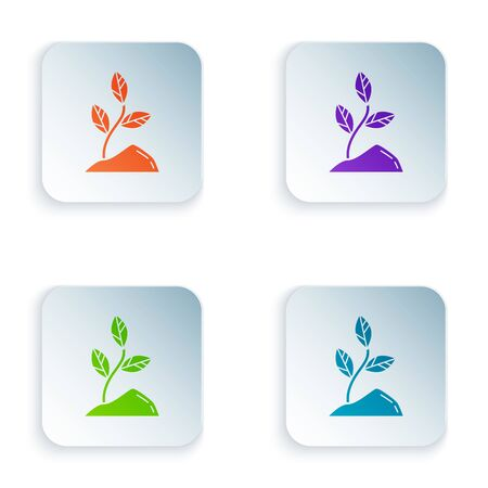 Color Sprout icon isolated on white background. Seed and seedling. Leaves sign. Leaf nature. Set icons in colorful square buttons. Vector Illustration