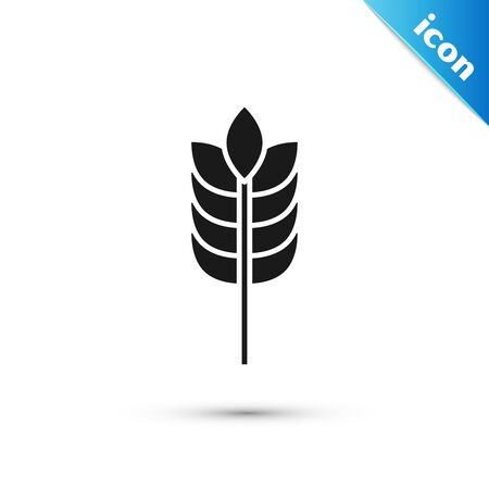 Black Cereals set with rice, wheat, corn, oats, rye, barley icon isolated on white background. Ears of wheat bread symbols. Vector Illustration