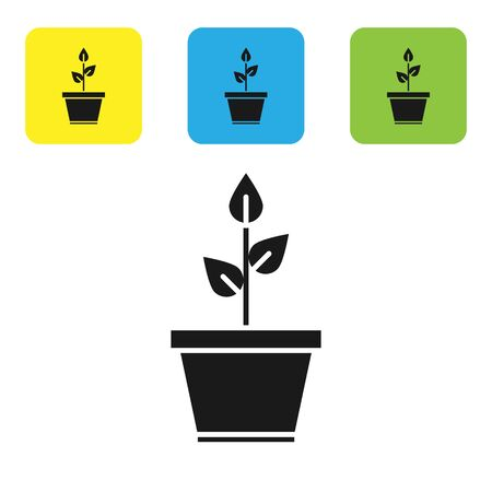 Black Plant in pot icon isolated on white background. Plant growing in a pot. Potted plant sign. Set icons colorful square buttons. Vector Illustration