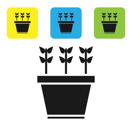 Black Plants in pot icon isolated on white background. Plants growing in a pot. Potted plant sign. Set icons colorful square buttons. Vector Illustration