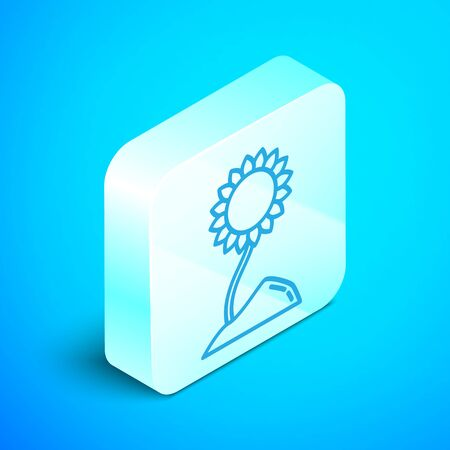 Isometric line Sunflower icon isolated on blue background. Silver square button. Vector Illustration Stockfoto - 133854033