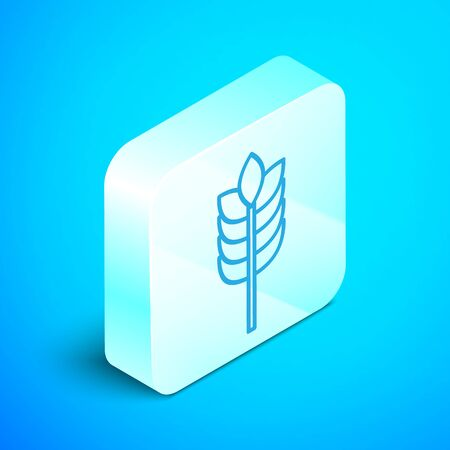 Isometric line Cereals set with rice, wheat, corn, oats, rye, barley icon isolated on blue background. Ears of wheat bread symbols. Silver square button. Vector Illustration Zdjęcie Seryjne - 133854147