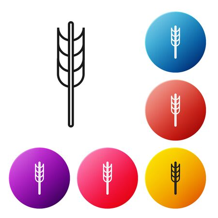 Black line Cereals set with rice, wheat, corn, oats, rye, barley icon isolated on white background. Ears of wheat bread symbols. Set icons colorful circle buttons. Vector Illustration  イラスト・ベクター素材