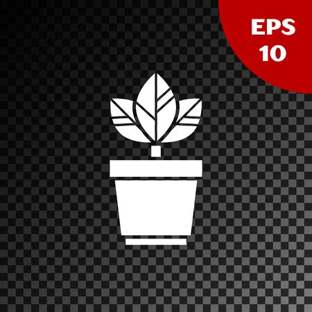 White Flowers in pot icon isolated on transparent dark background. Plant growing in a pot. Potted plant sign. Vector Illustration Standard-Bild - 134852918