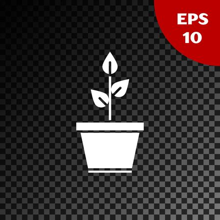 White Plant in pot icon isolated on transparent dark background. Plant growing in a pot. Potted plant sign. Vector Illustration Standard-Bild - 134853658