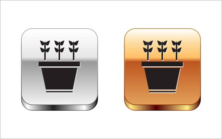 Black Plants in pot icon isolated on white background. Plants growing in a pot. Potted plant sign. Silver-gold square button. Vector Illustration