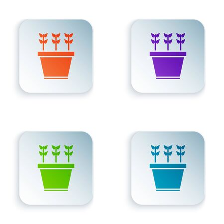 Color Plants in pot icon isolated on white background. Plants growing in a pot. Potted plant sign. Set icons in square buttons. Vector Illustration