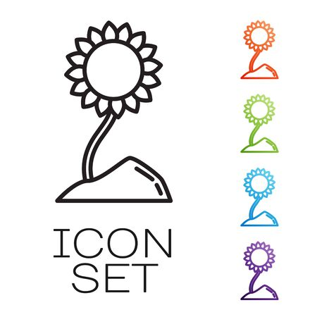 Black line Sunflower icon isolated on white background. Set icons colorful. Vector Illustration Иллюстрация