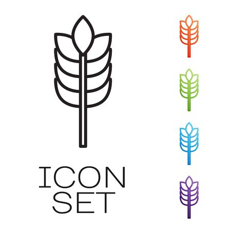 Black line Cereals set with rice, wheat, corn, oats, rye, barley icon isolated on white background. Ears of wheat bread symbols. Set icons colorful. Vector Illustration