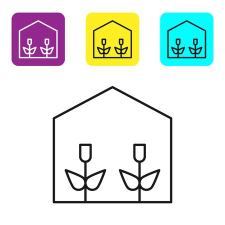 Black line Home greenhouse and plants icon isolated on white background. Set icons colorful square buttons. Vector Illustration