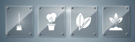 Set Plant, Leafs, Tree in pot and Shovel. Square glass panels. Vector