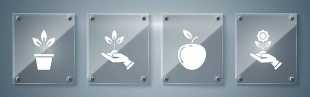 Set Hand holding flower, Apple, Plant in hand of environmental protection and Flowers in pot. Square glass panels. Vector Ilustracja