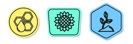 Set line Honeycomb, Sunflower and Sprout. Colored shapes. Vector