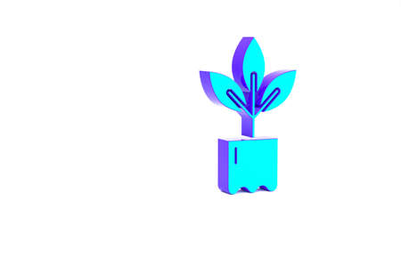 Turquoise Plant in bottle icon isolated on white background. Seed and seedling. Leaves sign. Leaf nature. Minimalism concept. 3d illustration 3D render Stockfoto