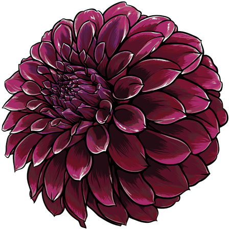 dahlia: Red dahlia flower with many shades of shadows and lights.