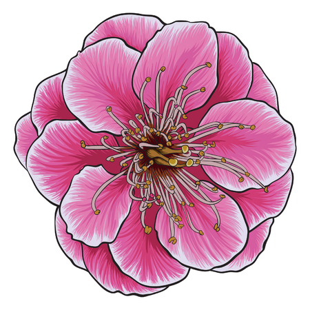 Wild himalayan cherry blossom vector. Delicate pink cherry flower.
