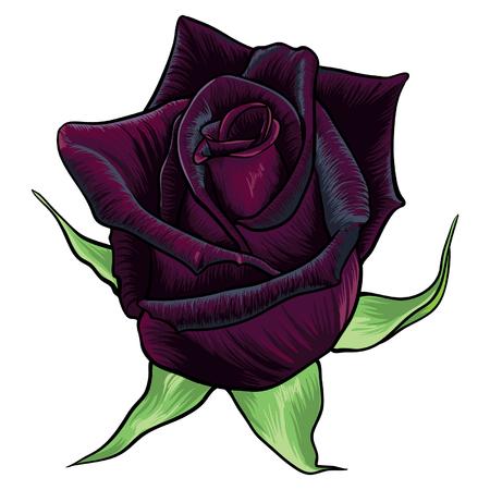 Realistic black baccara rose vector. Beautiful hand drawn flower design. Illustration