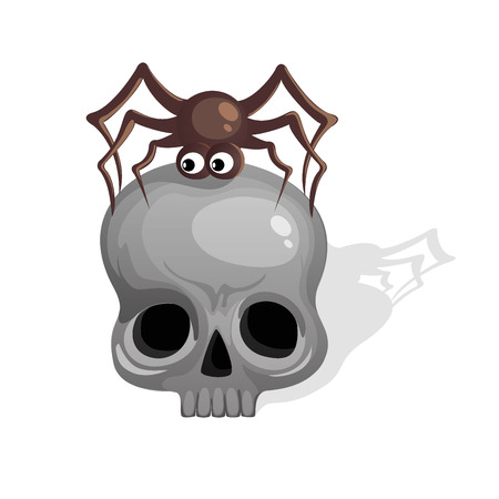 Scull with spider illustration Vector