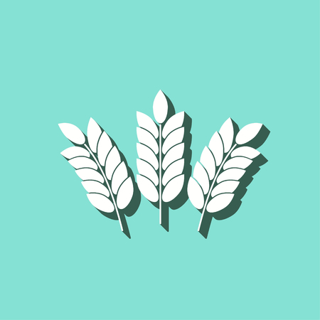 dietary: Barley vector icon with shadow. White illustration isolated on green background for graphic and web design. Illustration