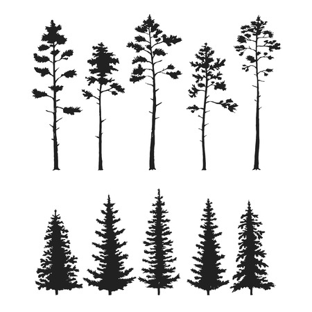 evergreen tree: set with pine trees isolated on white background. Illustration