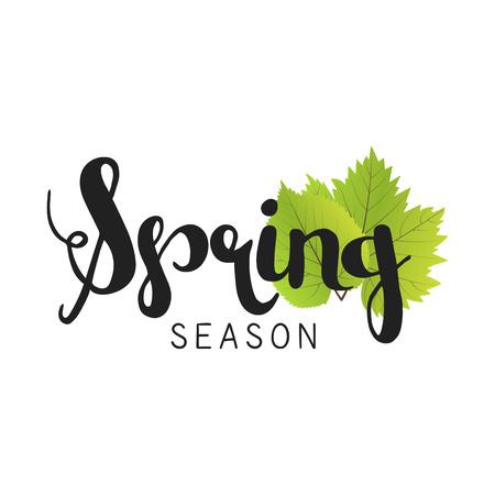 season: Spring season letter and green leaves vector illustration. White background Illustration