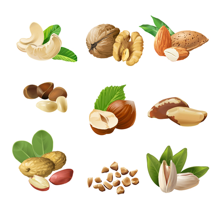 Set of vector icons of nuts - cashews, walnuts, almonds, pine nuts, hazelnuts, brazil nuts peanuts pistachio Vettoriali