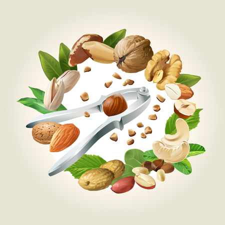 Vector illustration of nutcracker and nuts - cashews, walnuts, almonds, pine nuts, hazelnuts, brazil nuts peanuts pistachio Illustration