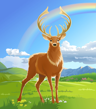 Vector illustration of majestic adult red deer in the meadow