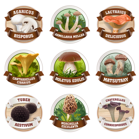 morel: Vector set of mushroom logos, stickers, made in a realistic style. Can be used for packing Illustration