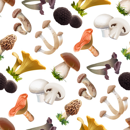 Vector seamless pattern of various kind of edible mushrooms. Realistic style Vettoriali