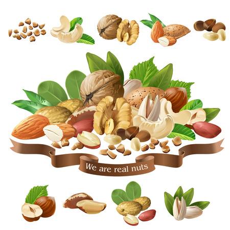 Vektor-Illustration Mischung von verschiedenen Arten Nüsse