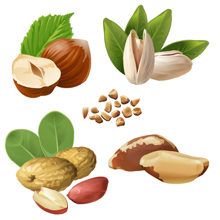 Set vector icons of nuts Çizim