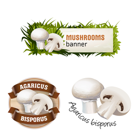 Set of mushroom vector banner, badge, sticker, icon with champignon Illustration
