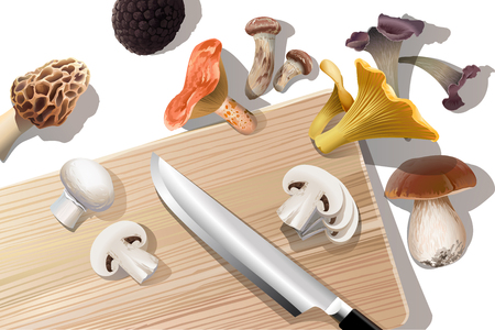 champignon: Vector background with various kind of edible mushrooms