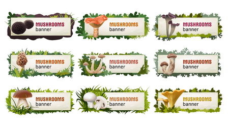 morel: Set of delicious mushroom banners and headers. Stock Photo