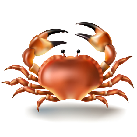 Vector illustration, badges, stickers, crab in realistic style isolated on white. Print, template, design element Illustration