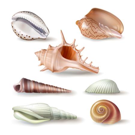 almeja: Conjunto de ilustraciones, insignias, pegatinas, conchas de diferentes tipos en estilo realista aislado en blanco