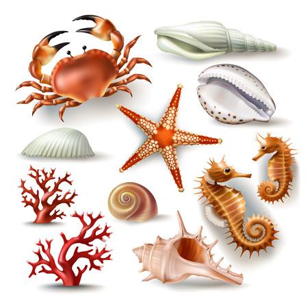 Set van vectorillustraties, insignes, stickers, zeeschelpen van verschillende soorten en koraal, krab, zeester in realistische stijl geïsoleerd op wit