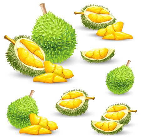 Set of vector color illustrations, icons of a durian fruit whole and peeled isolated on a white background. Print, template, design element