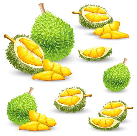 Reeks vectorkleurenillustraties, pictogrammen van een durian fruitgeheel en gepeld geïsoleerd op een witte achtergrond. Print, sjabloon, ontwerpelement