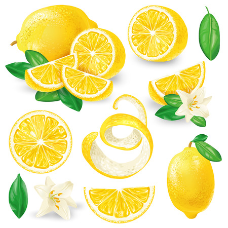 Set of whole, cut in half, sliced on pieces fresh lemons, leaves and flowers, twisted lemon peel hand drawn vector illustration isolated on white background. Vibrant juicy ripe citrus fruit collection Illustration