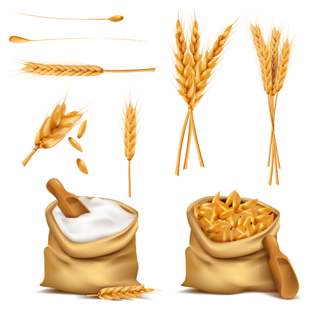 Vector set realistic canvas bags full of grains or cereals, flour, spikes. Harvest of wheat, rye, barley, oat. 3d illustrations, print, design elements