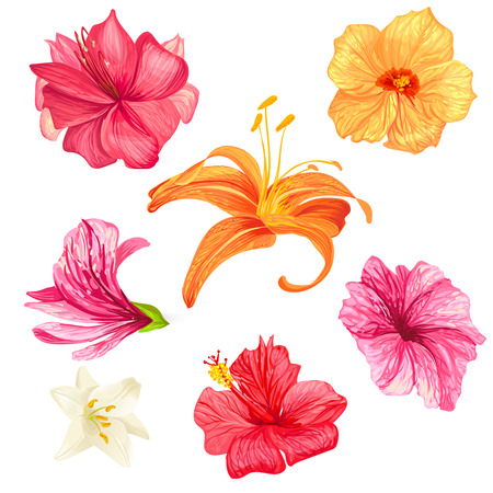 Set of vector illustrations of tropical hibiscus flowers and lilies with pink, red, orange and white petals isolated on a white background in a realistic style. Template, design elements, print.