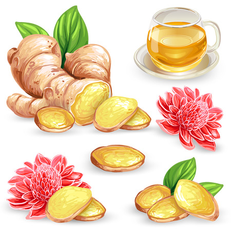Set illustration of a fresh ginger root, sliced, flower and ginger tea isolated on white background. Print, template, design element for packaging.