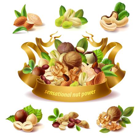 Nut images illustration Illustration