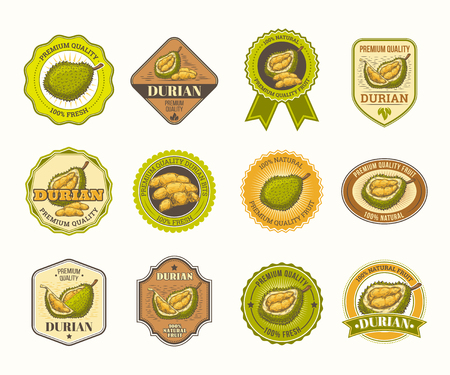 Set of color vintage badges, stickers, high quality signs, real fresh natural product with durian fruit, in an engraving style isolated on white. Stock Photo