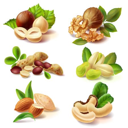 Set of different peeled and with peel and leaves nuts realistic illustrations isolated on white background. Full and cracked hazelnut, walnut kernel halves, peanuts, pistachio, almond, cashew