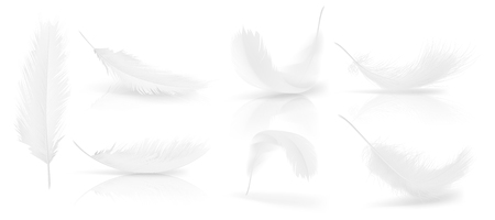 realistic 3d set of white bird or angel feathers in various shapes, isolated on background. Symbol of lightness, innocence, heaven, literature and poetry. Decoration element for your design Foto de archivo