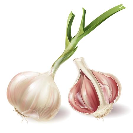 Insieme di vettore con testa d'aglio germogliata e metà del bulbo in bucce, isolato su priorità bassa bianca. Verdura biologica naturale, radice agricola, condimento piccante, ingrediente per mangiare e cucinare