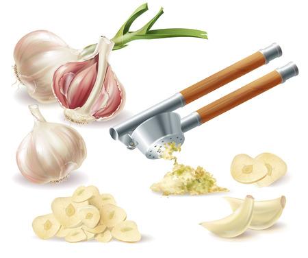 Vektor-Clipart mit gekeimtem Knoblauchkopf, geschälten Nelken, gehackten Scheiben und Metallpresse, lokalisiert auf weißem Hintergrund. Natürliches Bio-Gemüse, würziges Gewürz, Zutat zum Essen und Kochen